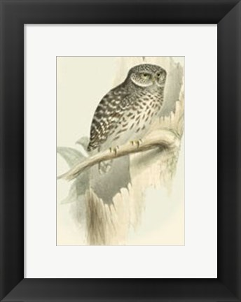 Framed Sparrow Owl Print