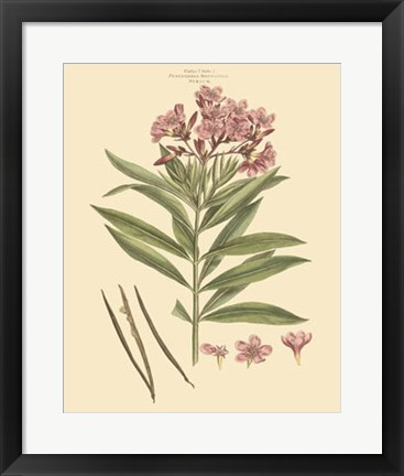 Framed Blushing Pink Florals III Print