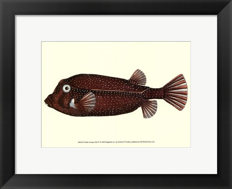 Framed Antique Fish IV Print