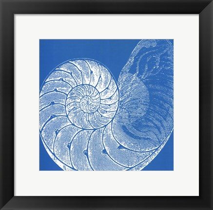 Framed Saturated Shells IV Print