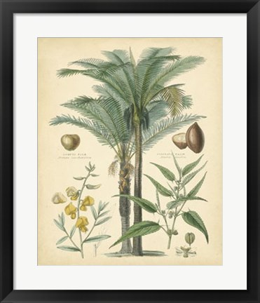 Framed Fruitful Palm I Print