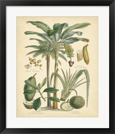 Framed Fruitful Palm II Print