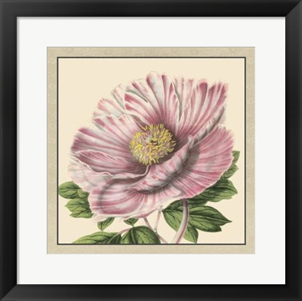 Framed Peony Collection II Print