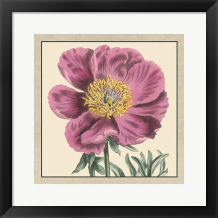 Framed Peony Collection III Print