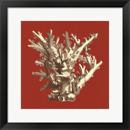 Framed Coral on Red I Print