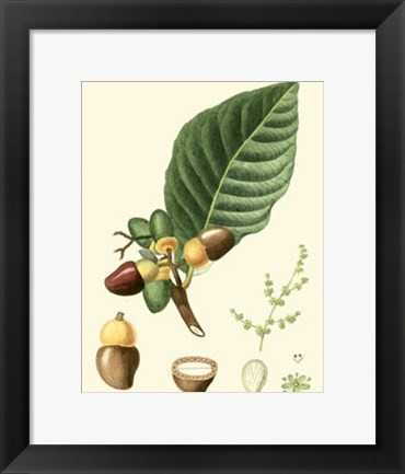 Framed Tropicals V Print