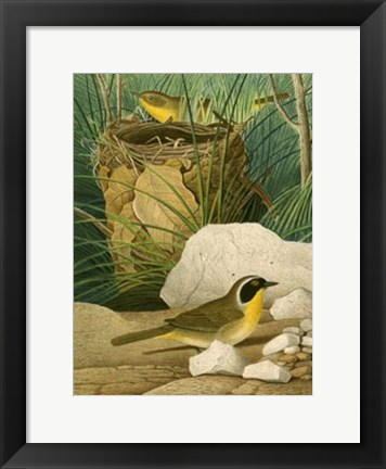 Framed Maryland Yellow-Throat Print