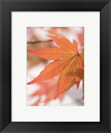 Framed Red Leafs Print