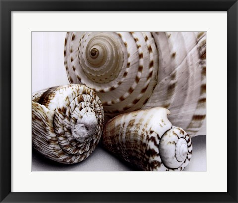 Framed Shell Collage Print