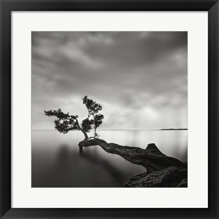 Framed Water Tree Print