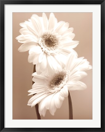 Framed Two Daisies Print