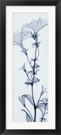 Framed Tall Petunia Print