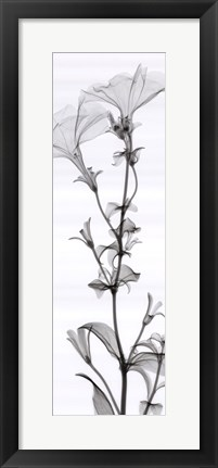 Framed Tall Petunia (small) Print