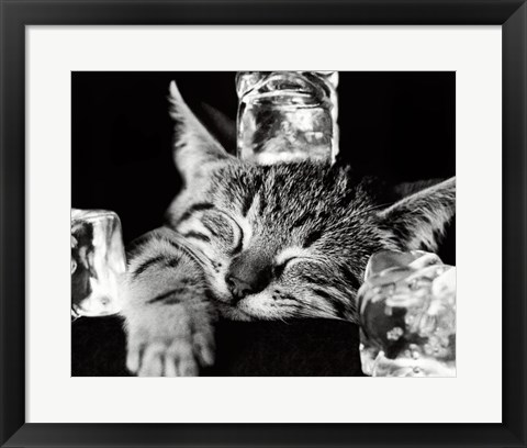 Framed Cool Cat II Print