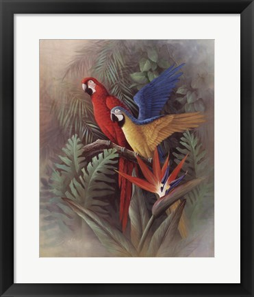 Framed Exotic Birds Print