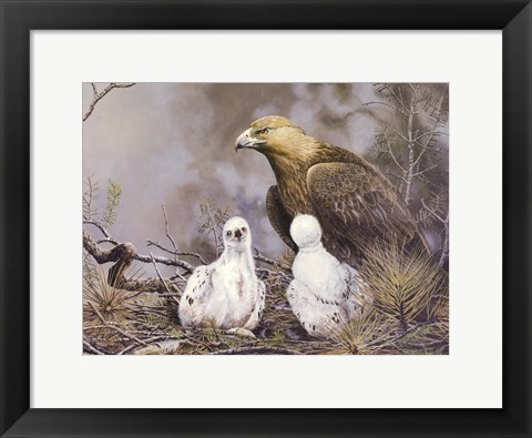 Framed Golden Eagle Nesting Print