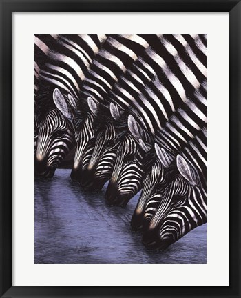 Framed Zebra's Watering Hole Print