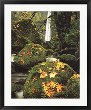 Framed Nature Waterfall Print