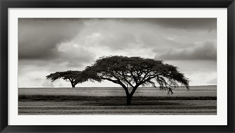 Framed Acacia Trees Print