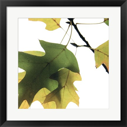 Framed Inflorescent Leaves III Print