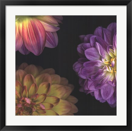 Framed Purple Dahlia I Print