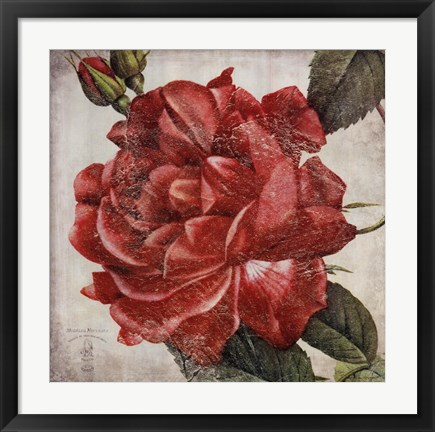 Framed Rose Flower Print