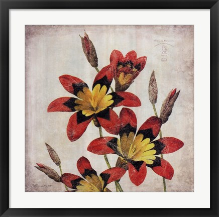 Framed Red Lily Flower Print