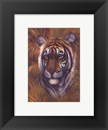 Framed Safari Tiger Print