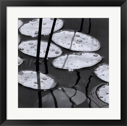 Framed Lily Pads, Sunrise Print