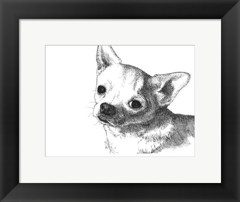 Framed Bruiser the Chihuahua Print