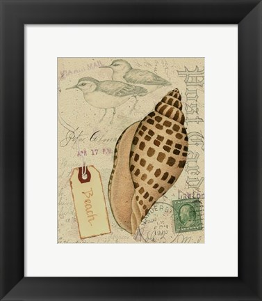 Framed Postcard Shells I Print