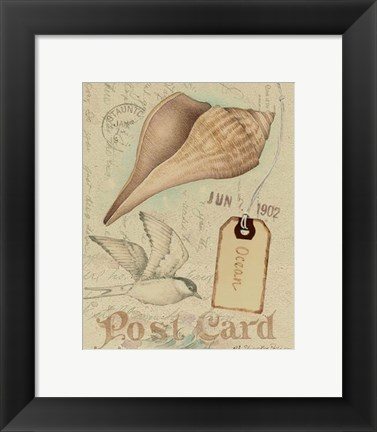 Framed Postcard Shells IV Print