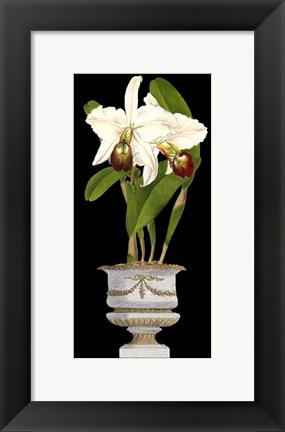 Framed Small Orchids in Silver (IP) II Print