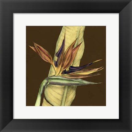 Framed Small Striking Tropical I (P) Print