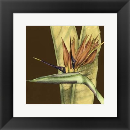 Framed Small Striking Tropical II (P) Print