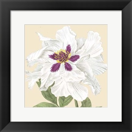 Framed Small Peony Collection IV (P) Print