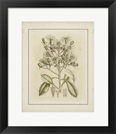 Framed Small Tinted Botanical I (P) Print