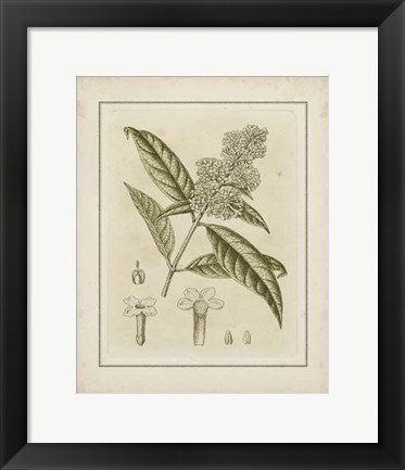Framed Small Tinted Botanical II (P) Print