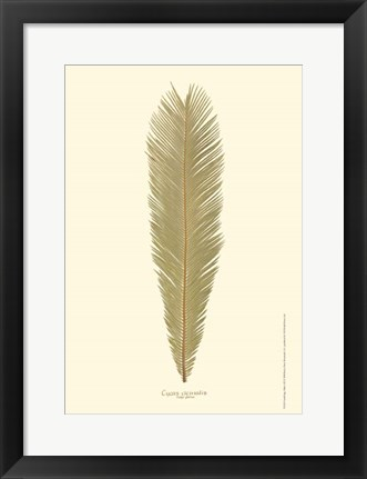 Framed Small Sago Palm I (P) Print