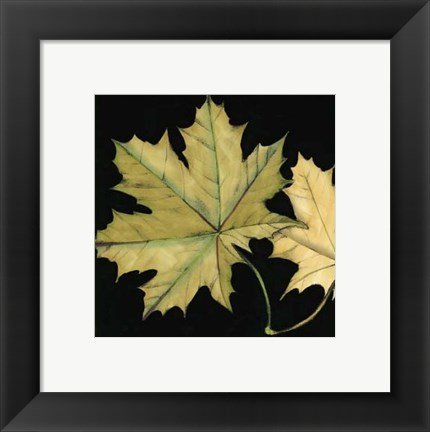 Framed Small Tandem Leaves II (P) Print
