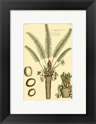 Framed Printed Exotic Palm III Print