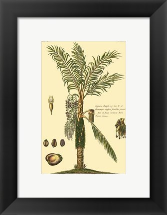Framed Printed Exotic Palm VI Print