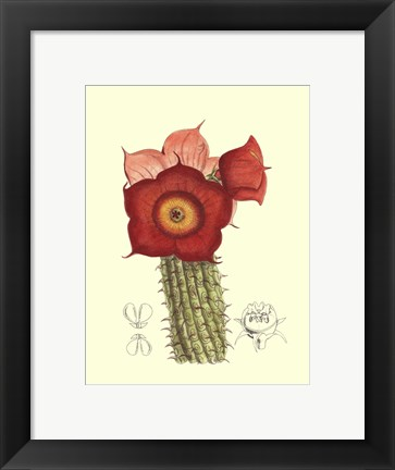 Framed Flowering Cactus II Print