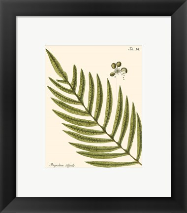 Framed Small Antique Fern I Print