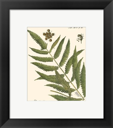 Framed Small Antique Fern II Print