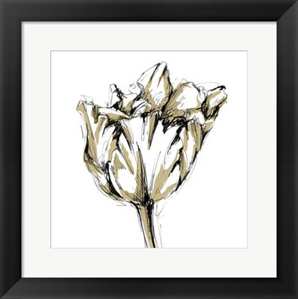 Framed Small Tulip Sketch I Print