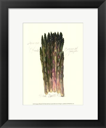 Framed Asparagus Officinalis Print
