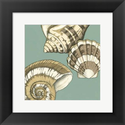 Framed Small Shell Trio on Blue II (P) Print