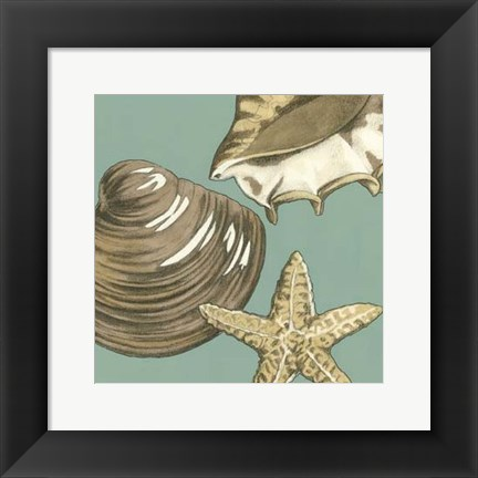 Framed Small Shell Trio on Blue IV (P) Print