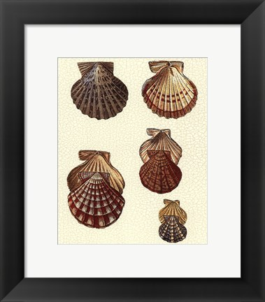 Framed Crackled Antique Shells I Print